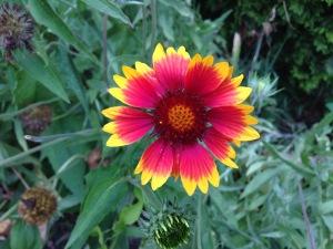 flower-2013