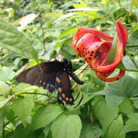 Butterfly, photo by Ray Hemachandra