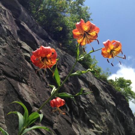 Flowers, photo by Ray Hemachandra